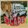 Gyvūnų prieglauda Escape